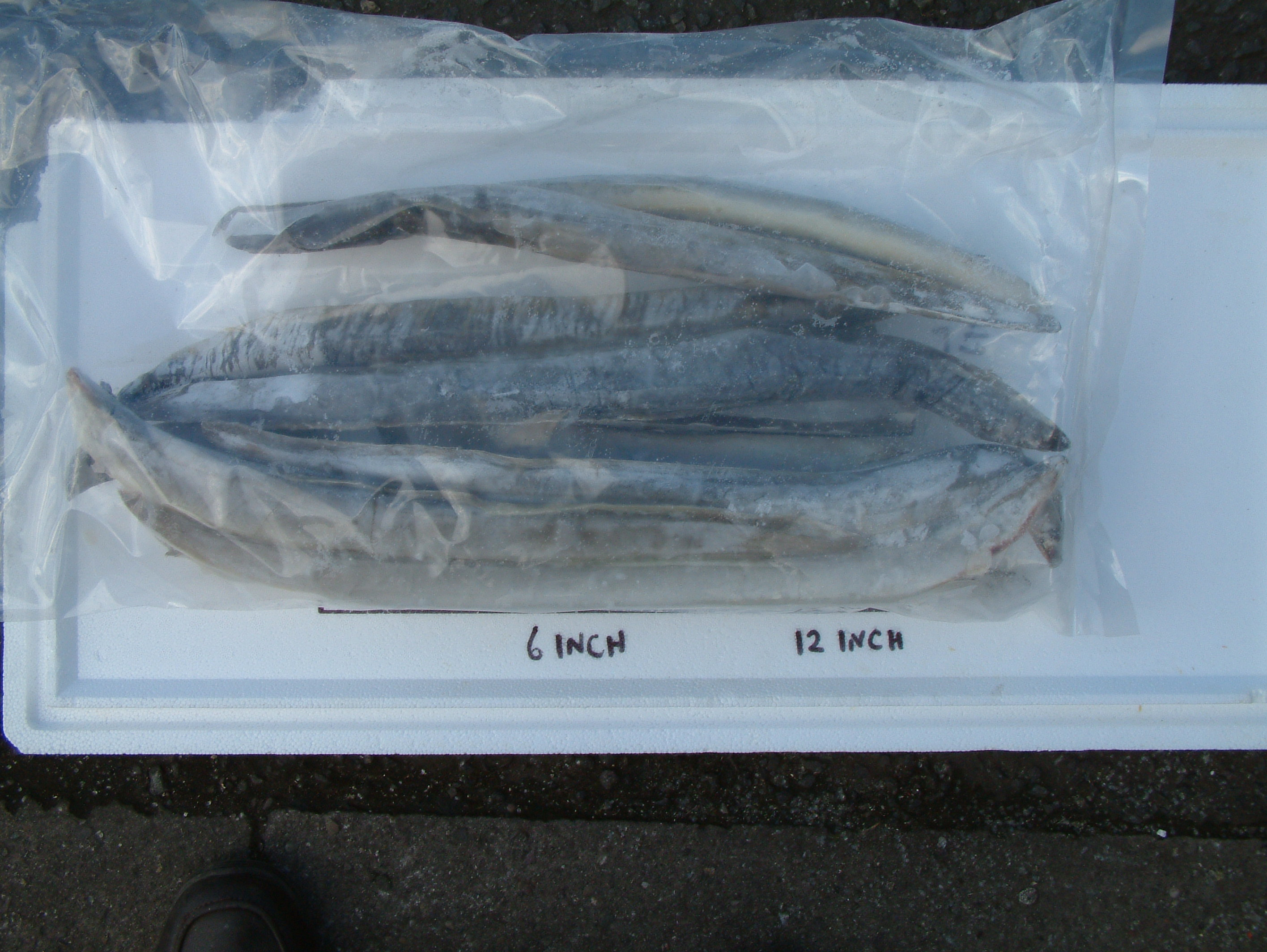 Bulk eels 3kg fishing tackle the tackle shop for Frozen fishing pole