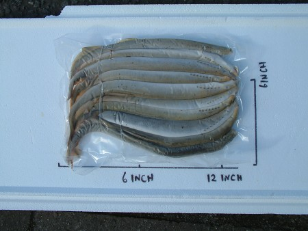 Bulk Lamprey 20 fish product image