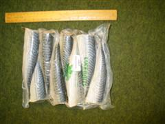 Half Mackerel x 8 product image