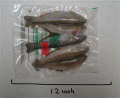Rainbow Trout x 5 - 6 to 7 inch product image